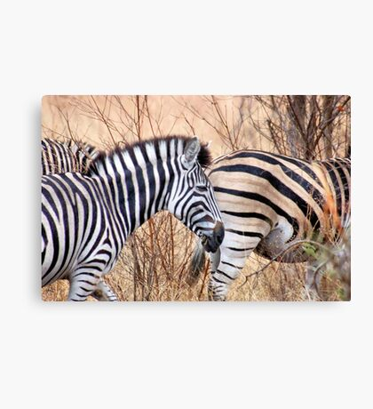 BURCHILLS ZEBRA Canvas Print