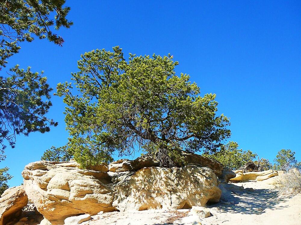 Sandstone Tree by RoaddogDesigns