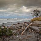 Windy Day by Brendan Buckley