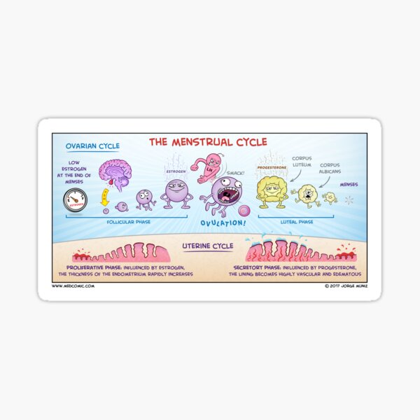 The Menstrual Cycle Sticker