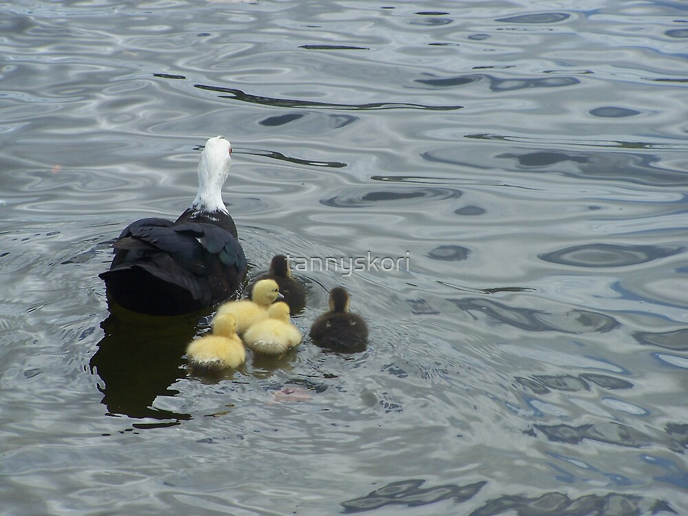 going for a swim  by tannyskori