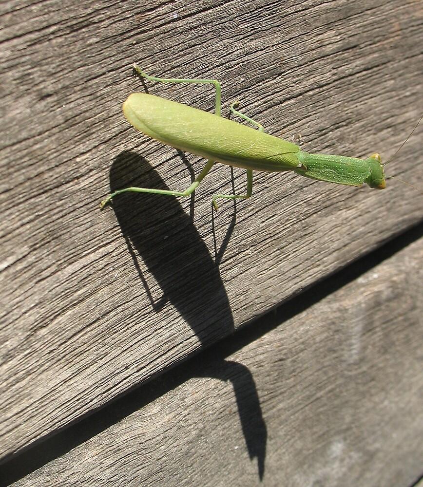 Praying Mantis by s1mbo