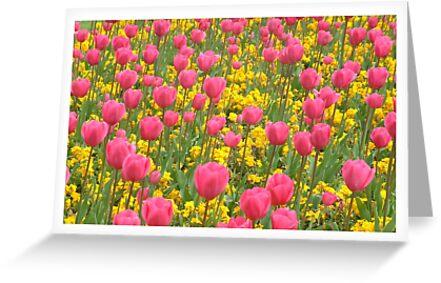 Field of Tulips by Peter Barrett