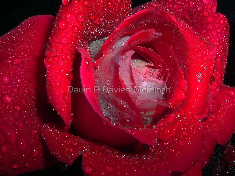 Drenched Beauty by Dawn B Davies-McIninch
