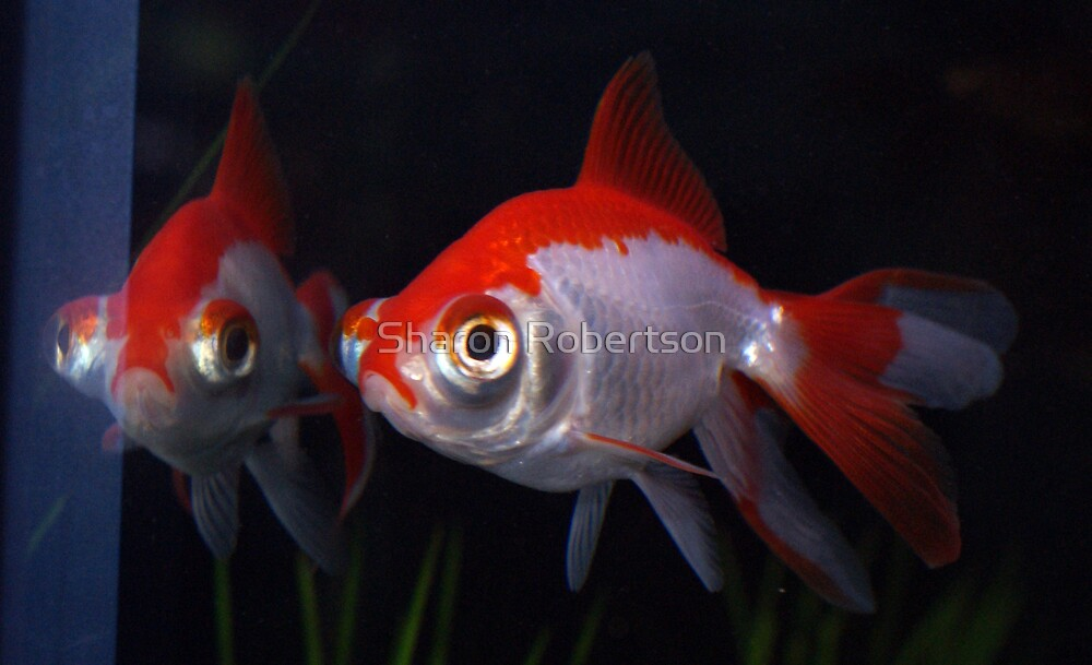 Fishy Friends or is it my Reflection by Sharon Robertson