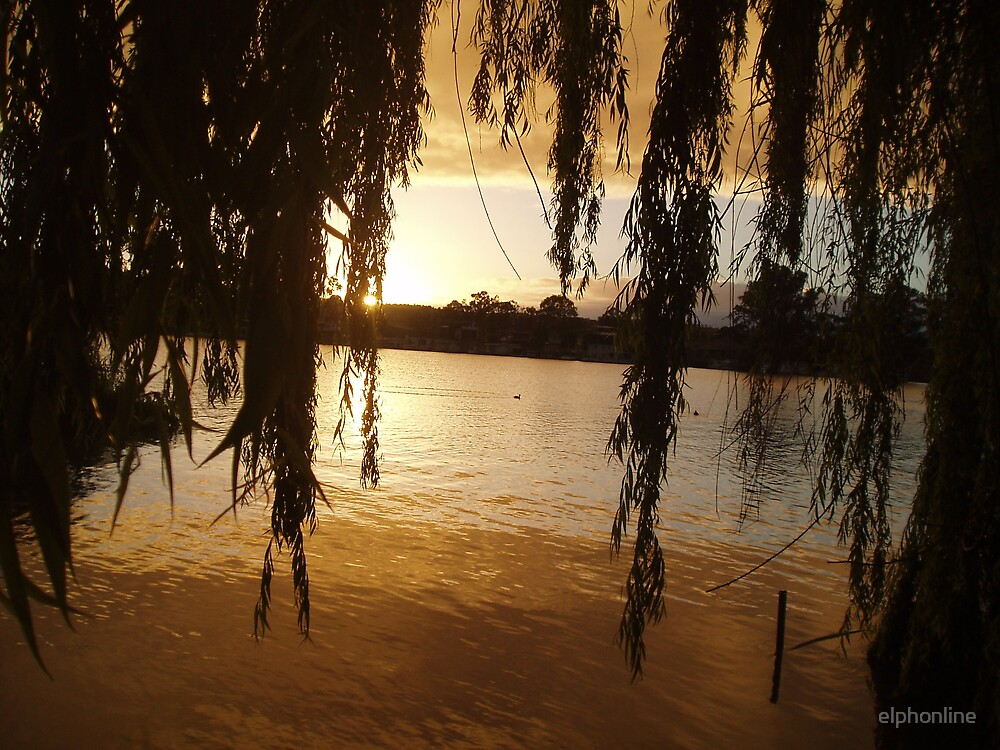 Willows on the Murray. by elphonline