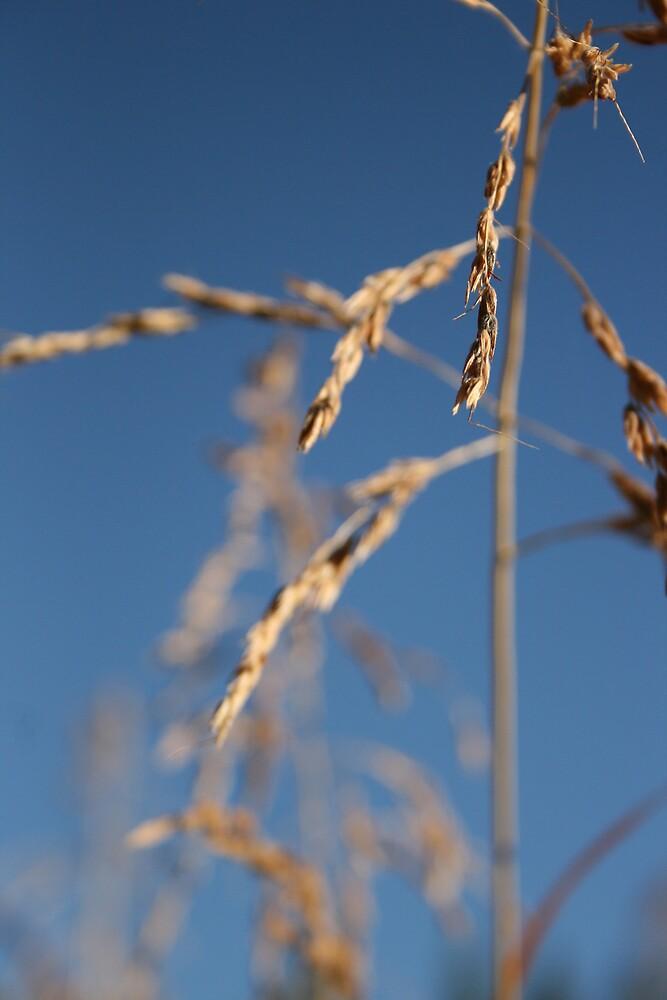 Grain 2 by Rebecca Leonard