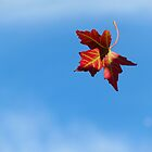 The Journey of a Leaf by Sandra Fortier