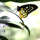 Butterfly Pause by ShotsOfLove