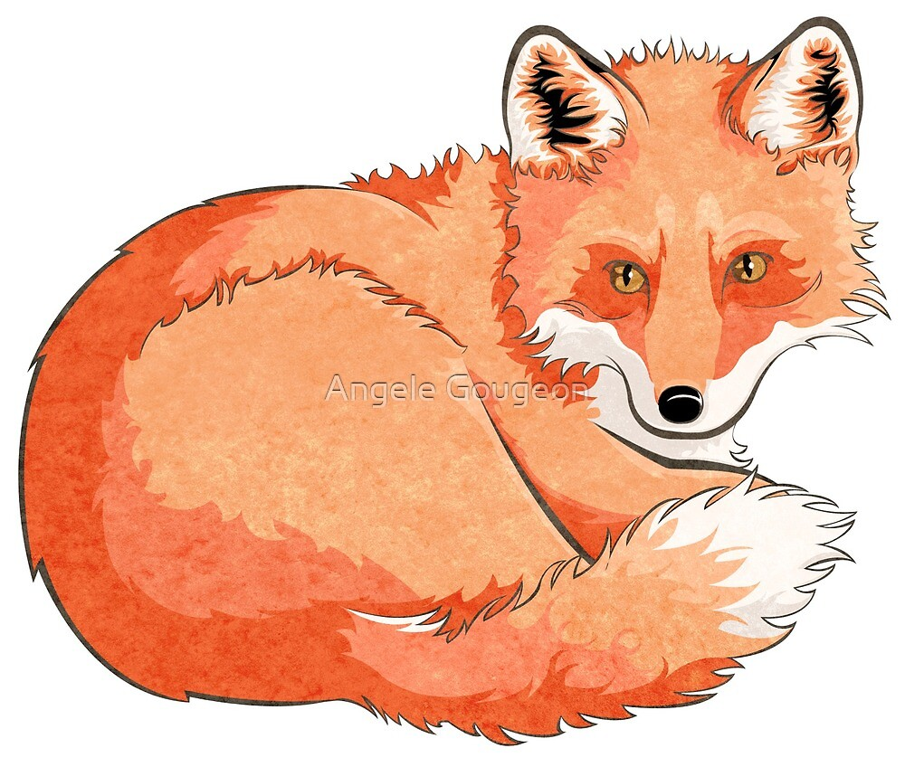 Curled Fox by AnMGoug