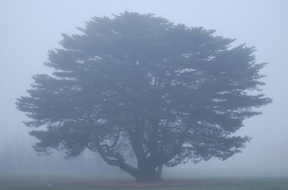Lone tree on a foggy morning. by mirken21