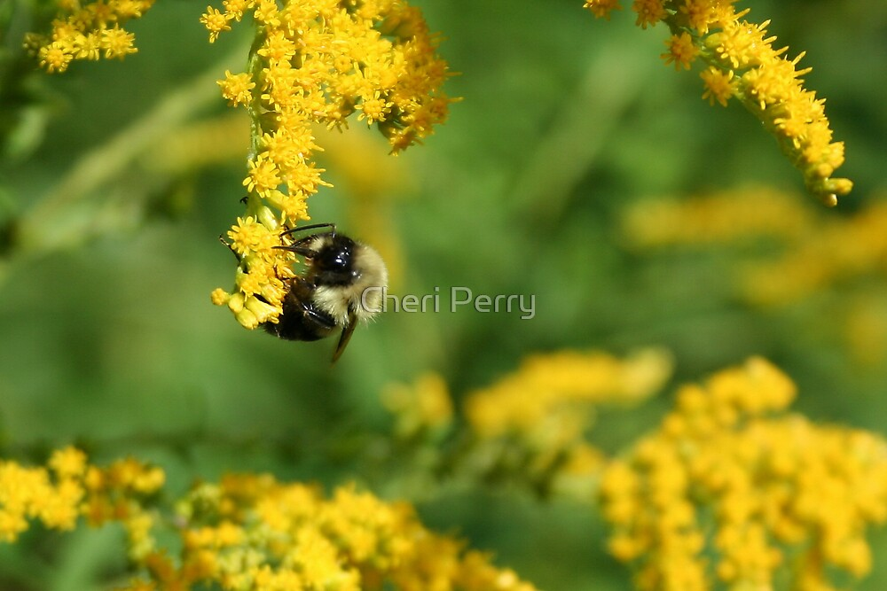 Yummy Golden Rods by Cheri Perry