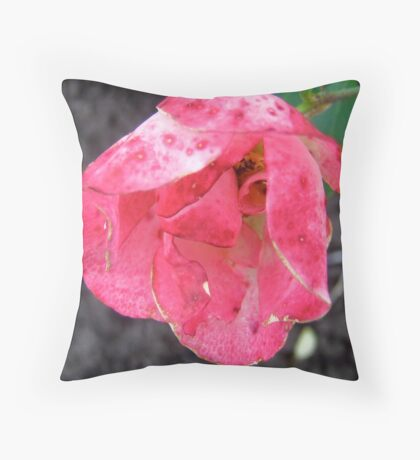 Governor General's rose 2 Throw Pillow