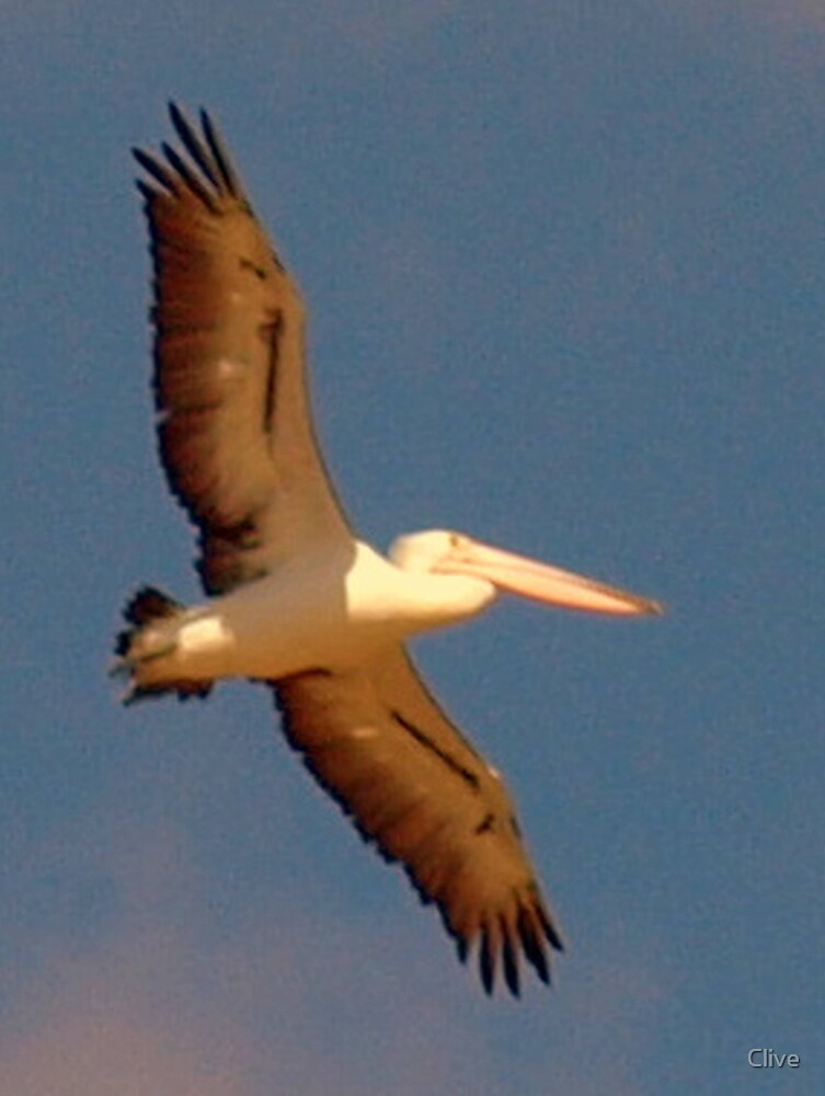 Pelican by Clive