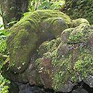The Green Dragon by eric shepherd