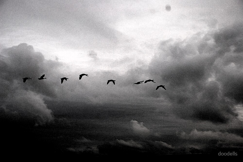 birds from above by doodells