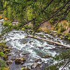 USA. Oregon. Rogue Gorge. Scenery. by vadim19