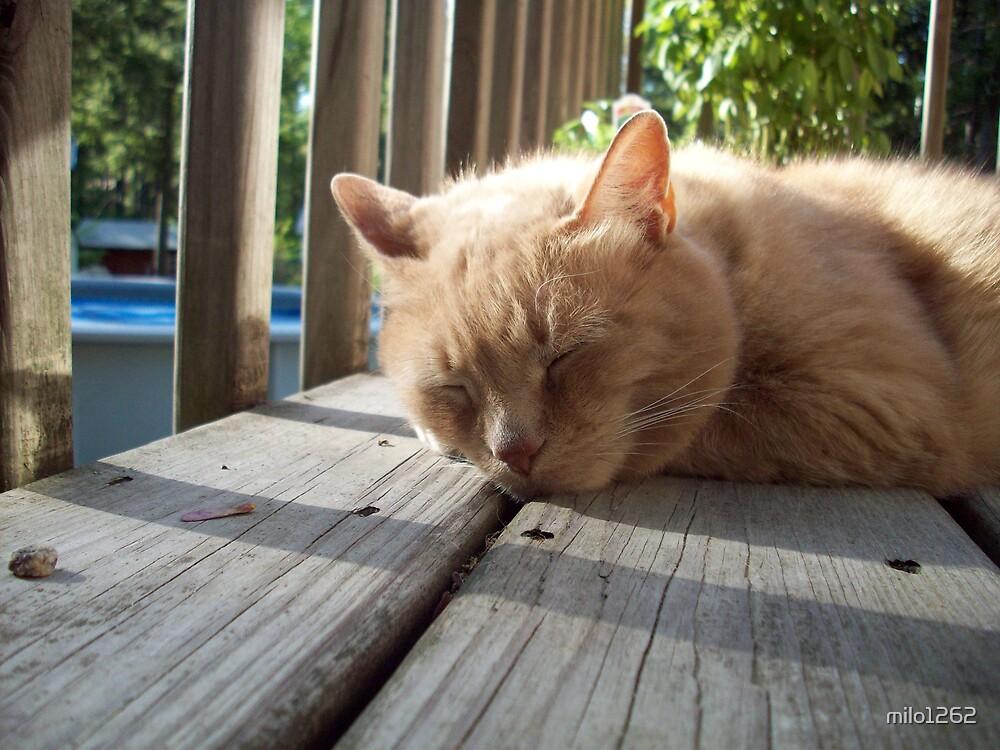 Milo naps on the deck by milo1262