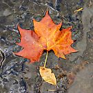 Fall  by LizzieMorrison