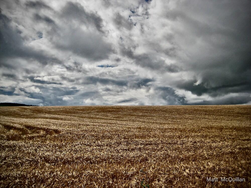 Field of Gold by Matt  McQuillan