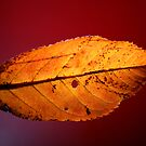 Backlighting the autumn by MooseMan