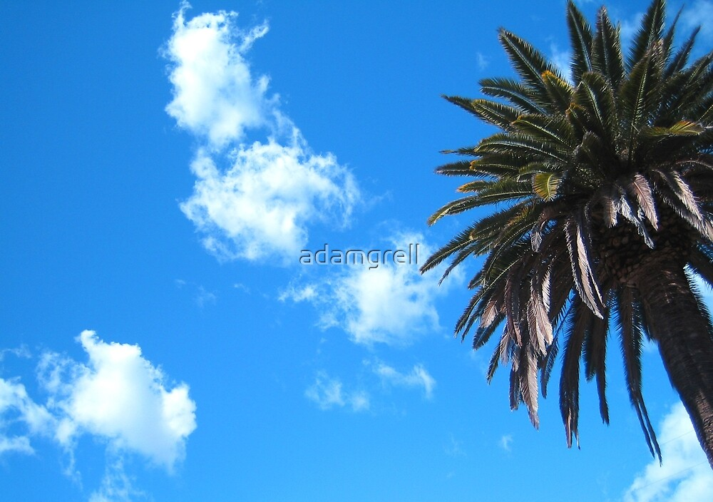 Palm and Clouds by adamgrell
