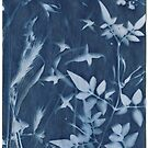 Flower cyanotype by Catherine Hadler