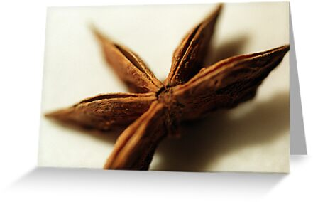 Star Anise by pwrighteous