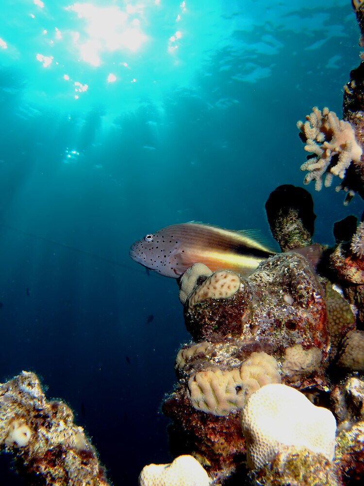 Underwater by lilithlita