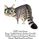 European Wildcat by rohanchak