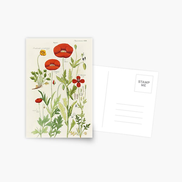 Botanical illustration: Poppy by David Dietrich – State Library Victoria Postcard