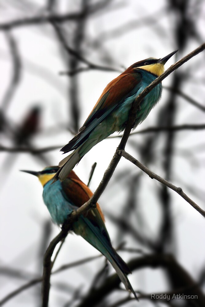 The Birds by Roddy Atkinson