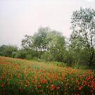 Springtime memory by Kasia  Kotlarska