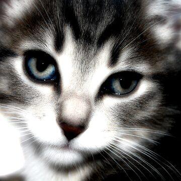Cat Zilla by btchpls