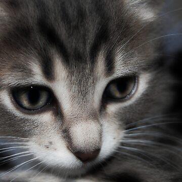 Cat Zilla II by btchpls