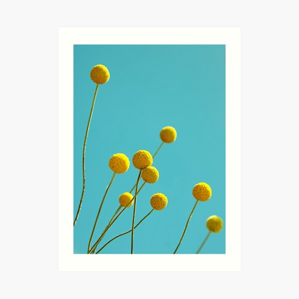Billy Buttons Art Print