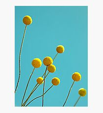 Billy Buttons Photographic Print