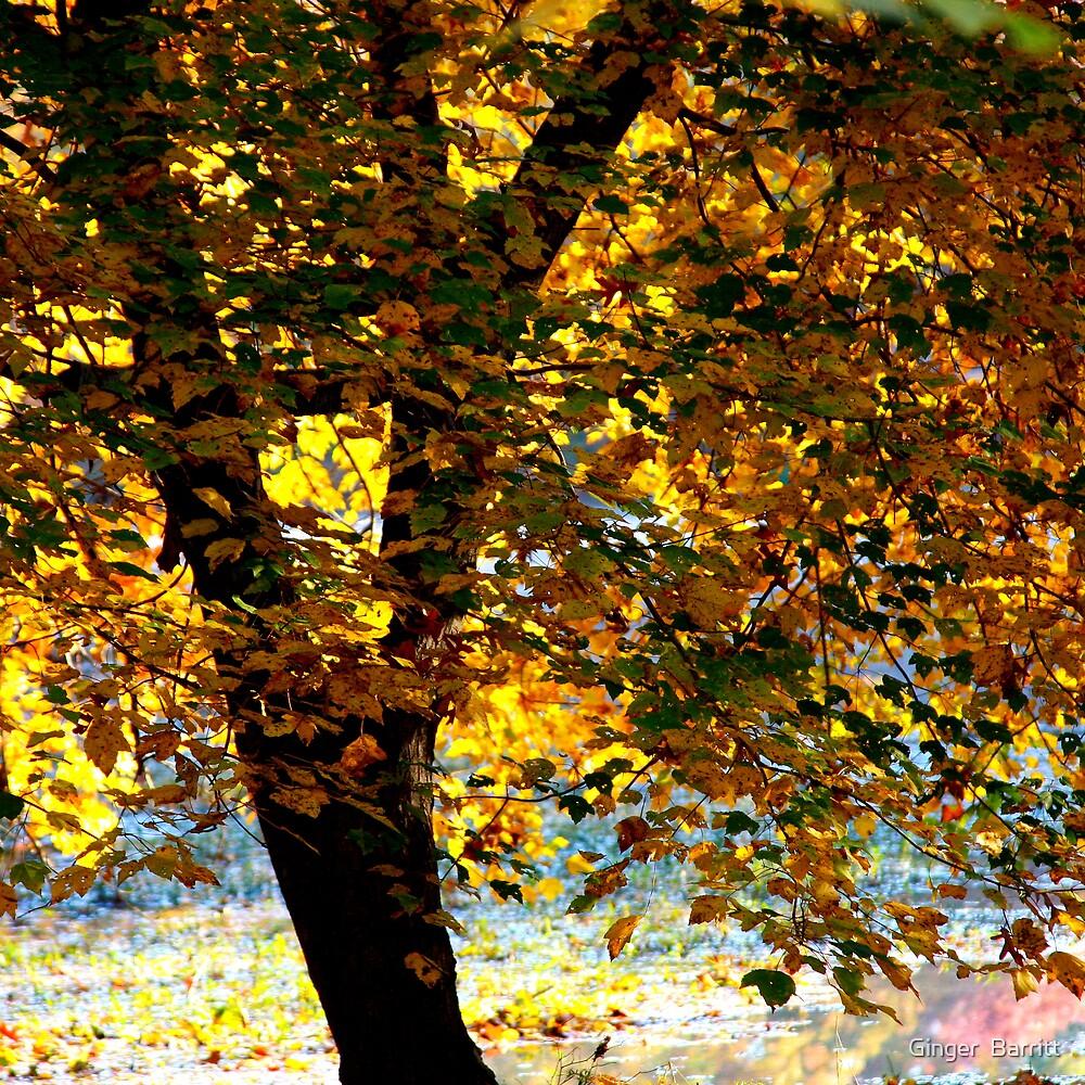 Golden  by Ginger  Barritt