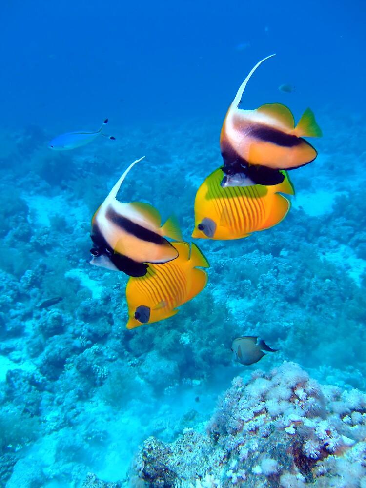 Underwater Scene by lilithlita