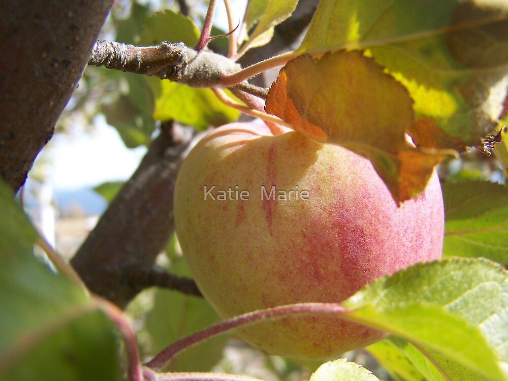 Fall Apple... by Katie  Marie