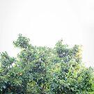 Mulberry Tree by Kim Jackman
