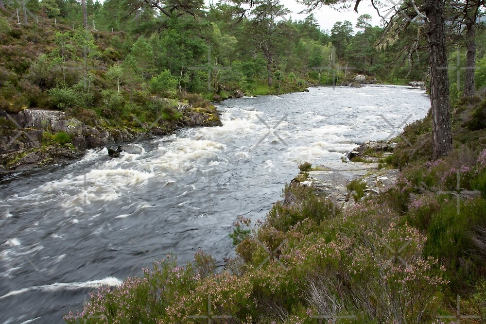 River flowing through Caledonian Pine Forest by SiobhanFraser