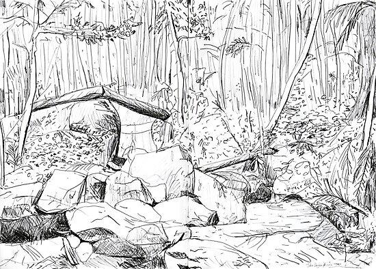 Rainforest by John Douglas