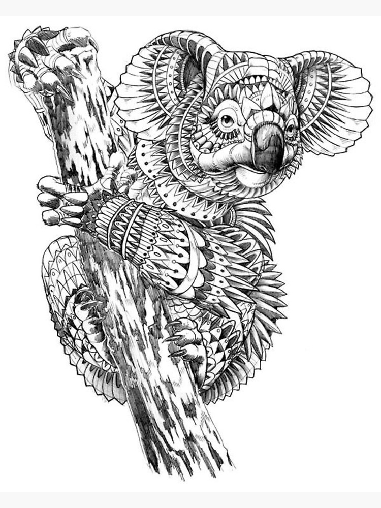- Adult Coloring Pages: Koala