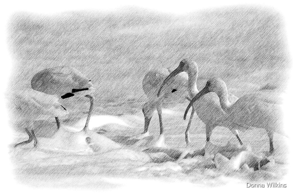 Ibis in Snow? - Pencil by Donna Adamski