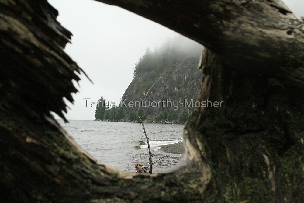 Nature's Frame by Tanya Kenworthy-Mosher