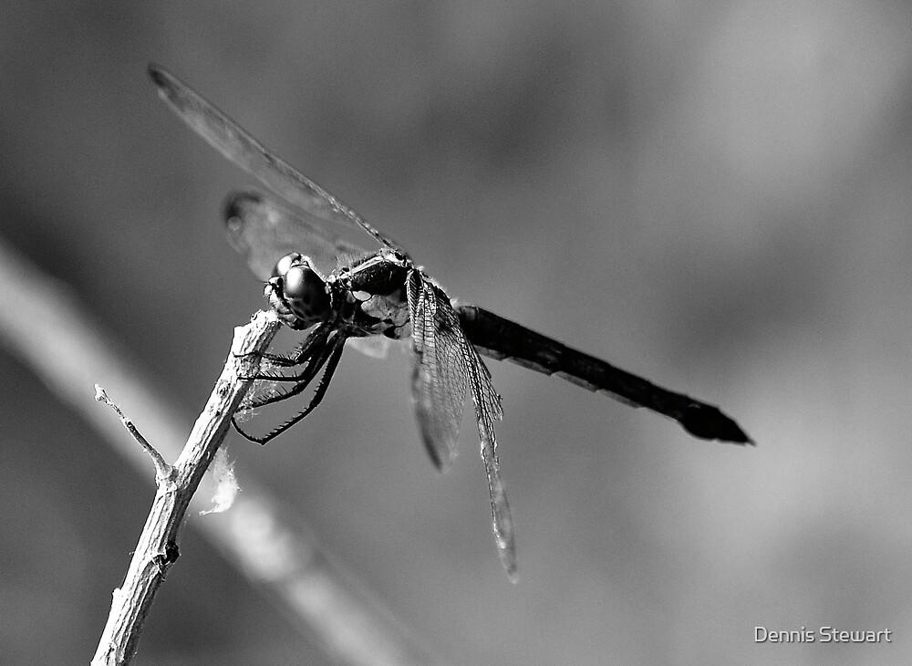 Black & White Dragonfly by Dennis Stewart
