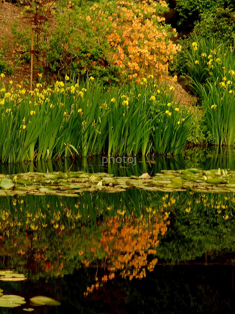 photoj Flora Landscape by photoj