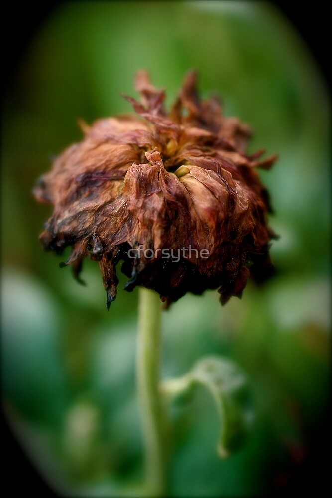 Dead Bud by cforsythe