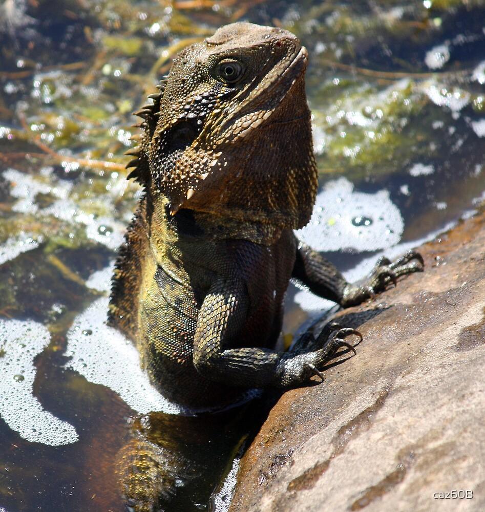 Mr Lizard Praying! by caz60B